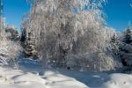 06_zwykle_drzewo