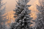 06_zwykle_drzewo_plus_gra_kolorow