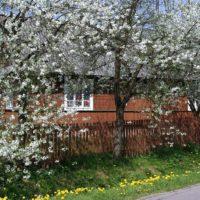 Wiosna: Kilka dni na Roztoczu Środkowym i w Lasach Janowskich