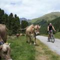 W dolinie Val S-Charl