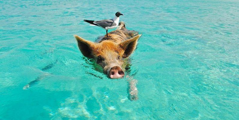 Egzotyczne wakacje w ziemie - rejs na Bahama