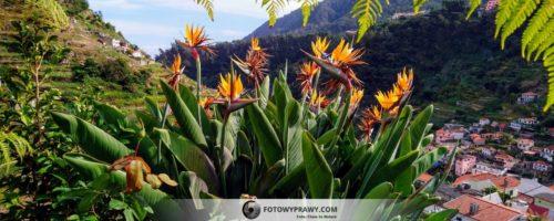 Madera – wiosna zrodzona z wulkanu