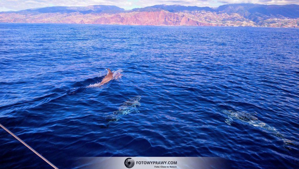 Rejs na obserwację ssaków morskich