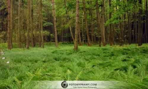 Z łukiem do lasu – Stump Shooting