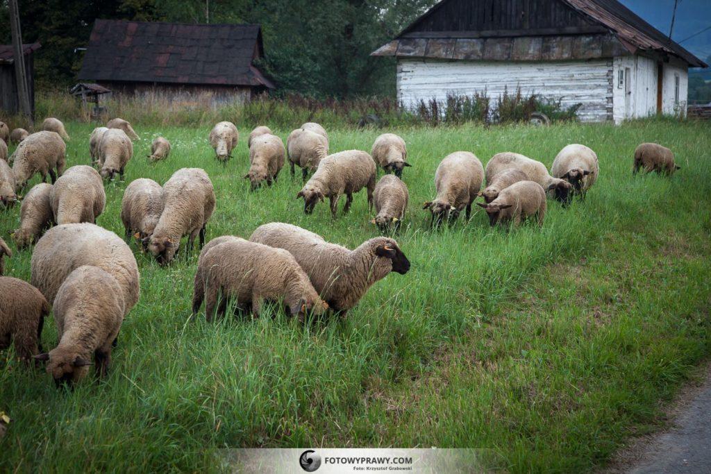 fotowyprawy_beskid-niski_bieszczady___04