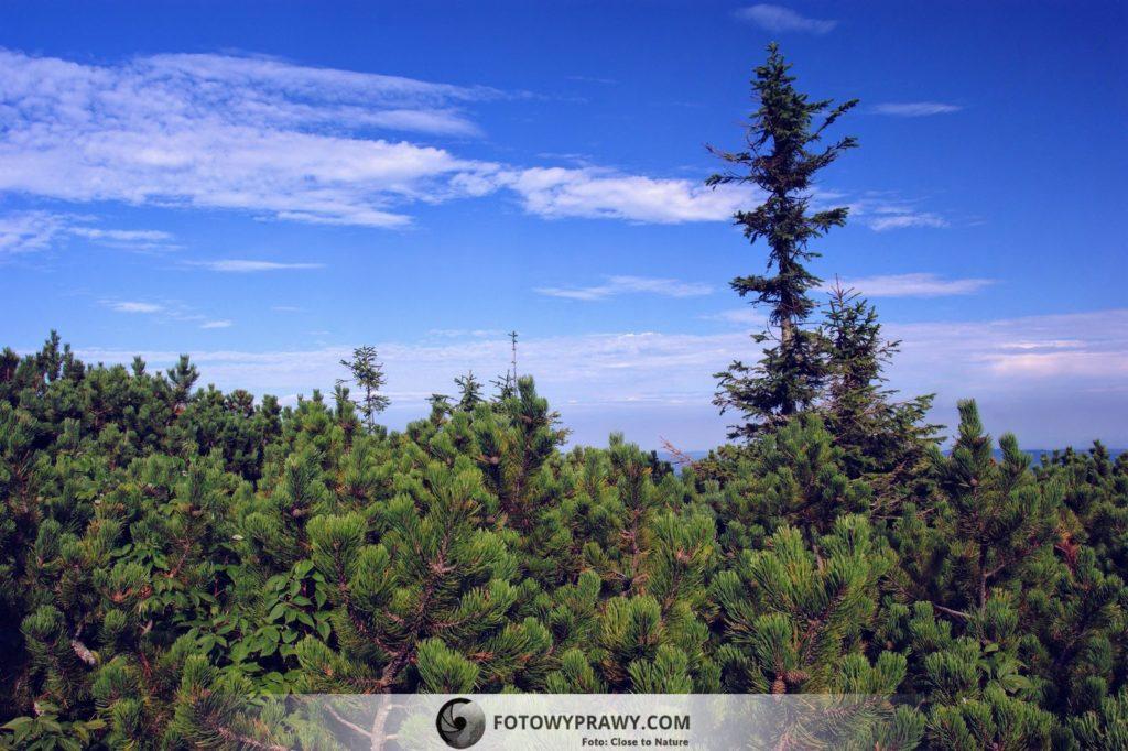 Babia Góra w jesiennej odsłonie